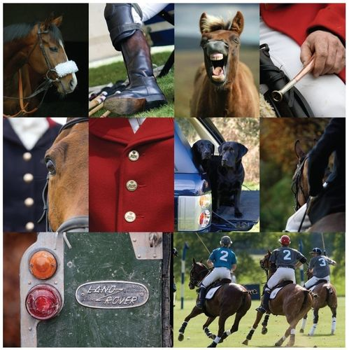 Equestrian - Colour Notecards (Packs of 10)